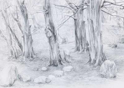 """Ellen Luise WEISE, """"Wald"""", Bleistift auf Papier (2017)"""