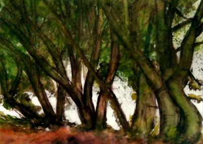 """Lietzenburg Kunst - Aquarell mit Tusche-Rohrfeder """"Hiddensee. Buchenhain im Lietzenburgwald."""" (ca. 2008) von Manfred SIEBER"""