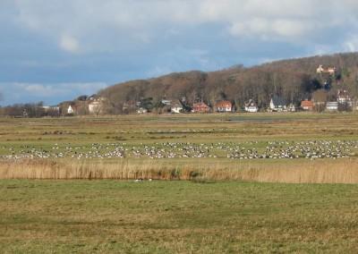 Lietzenburg-Umgebung - Blick über die Salzwiesen zur Lietzenburg
