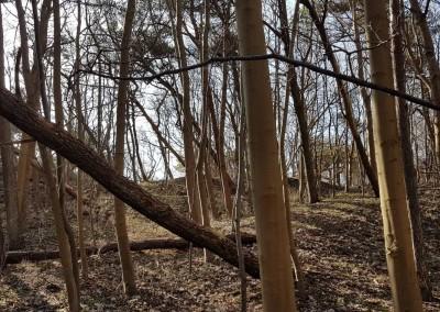 Vorfrühling im Lietzenburgwald